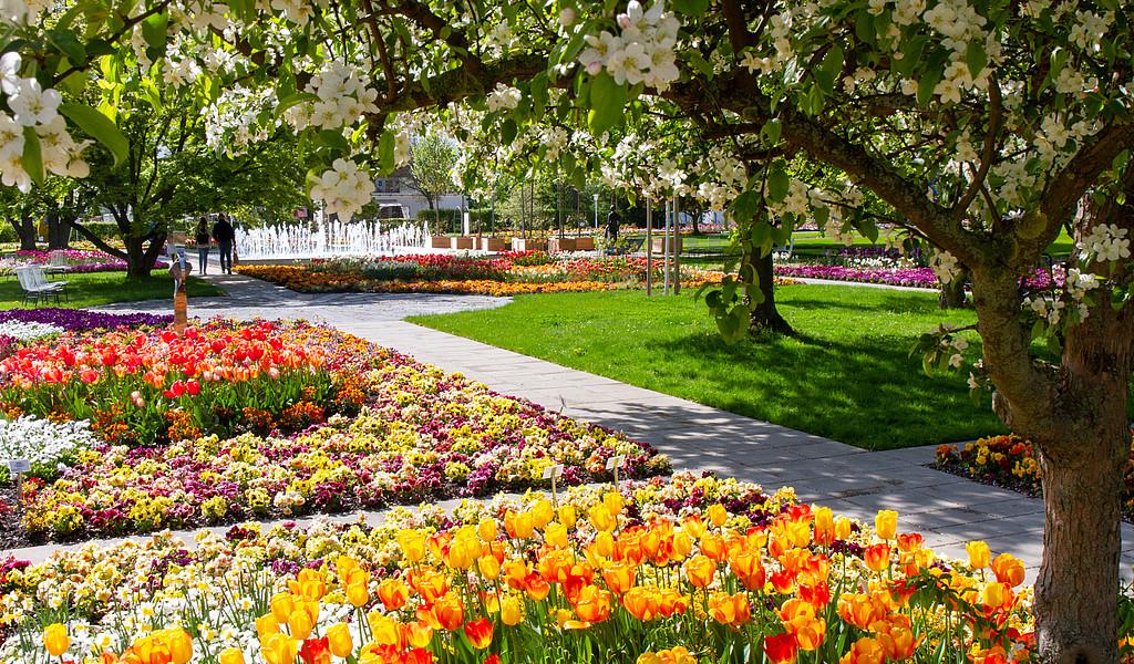 Blumenbeete im egapark zur BUGA 2021