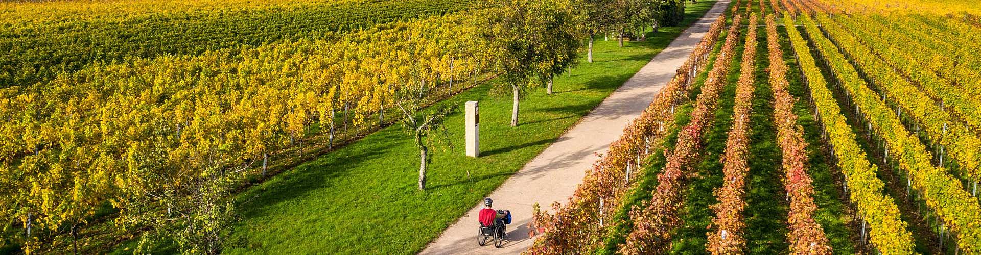 Mit dem Handbike unterwegs auf dem biblischen Weinpfad zu Kirrweiler.