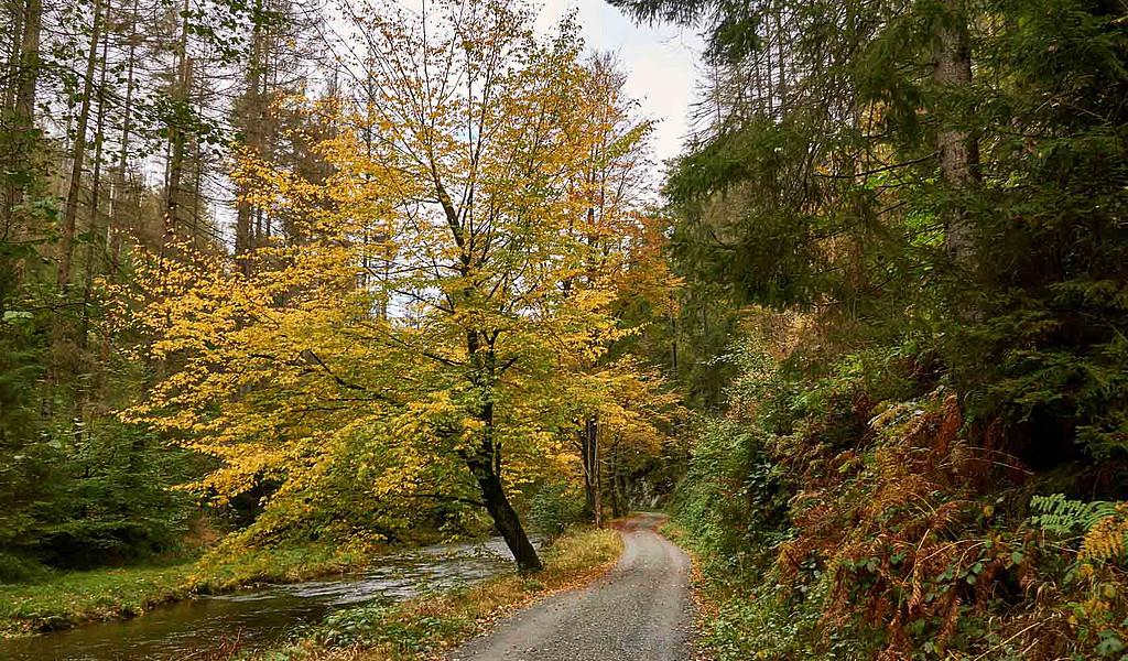 Herbststimmung im Kirnitzschtal in der Sächsischen Schweiz.