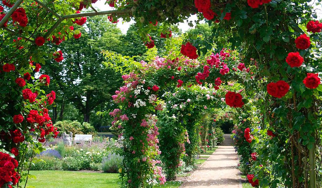 Im Ostdeutschen Rosengarten Forst  im Lausitzer Seenland ist der Duft der Rosen allgegenwärtig.