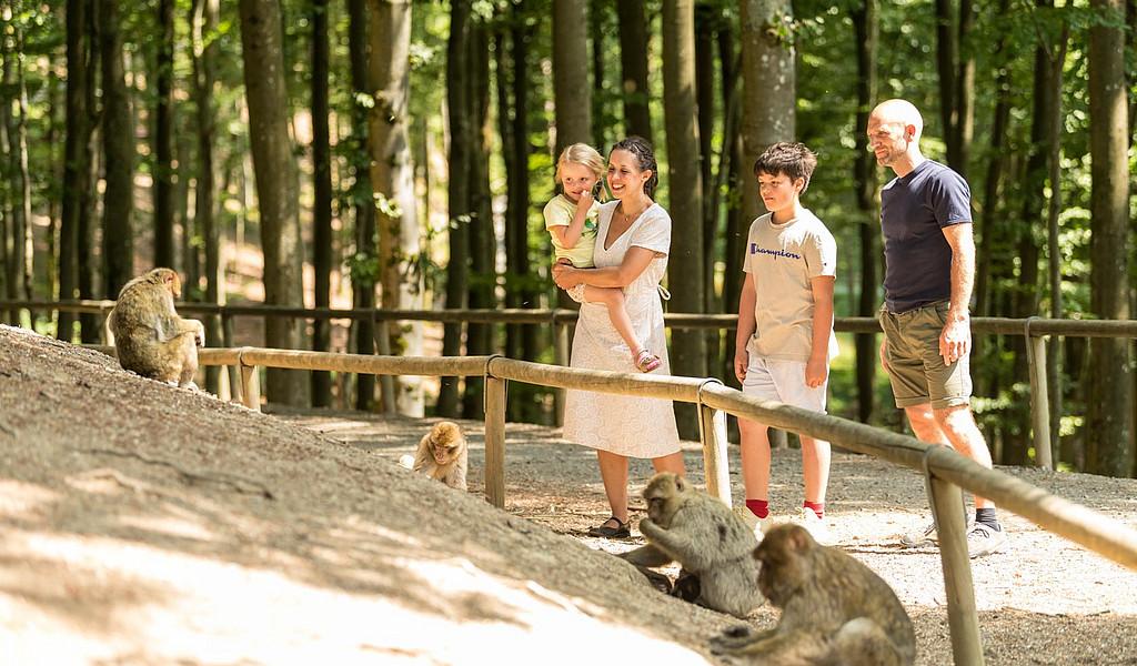 Affen beobachten im Wild- und Erlebnispark Daun.