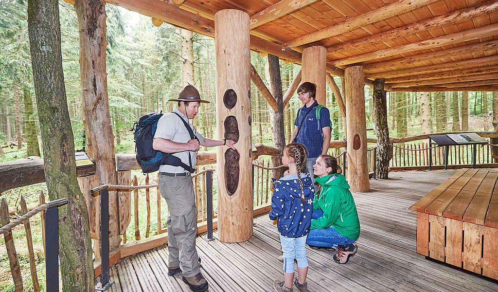 Der Wilde Weg im Nationalpark Eifel informiert über Wildnis und Waldentwicklung.