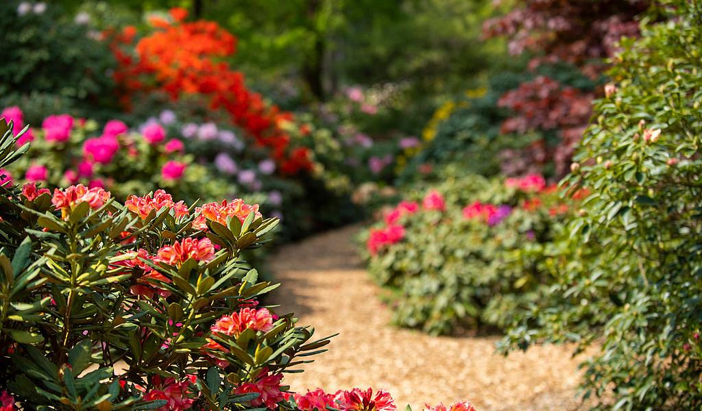 Rhododendronpark Westerstede in Ostfriesland