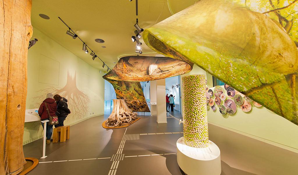 """Die Ausstellung """"Wildnis(t)räume"""" im historischen Forum Vogelsang IP ist nach Reisen für Alle zertifiziert."""